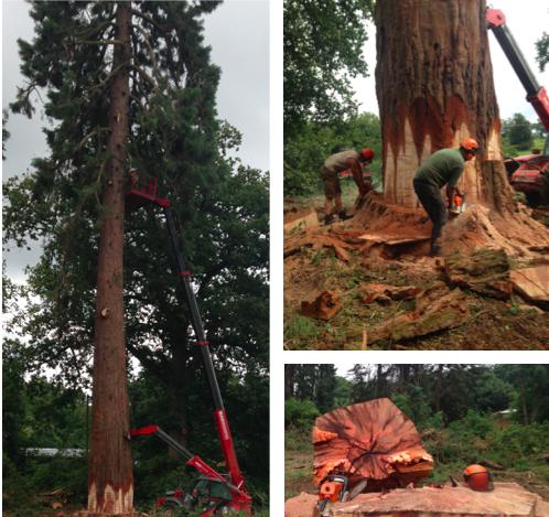 Tree_Surgery